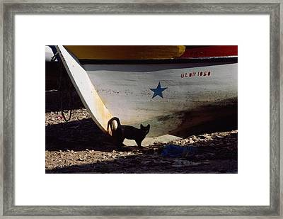 A Black Cat Stands Next To The Bow Framed Print by Medford Taylor