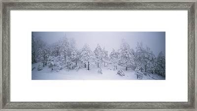A Blizzard On Spruce Mountain Framed Print by Rich Reid