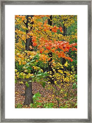 A Blustery Autumn Day Framed Print by Frozen in Time Fine Art Photography