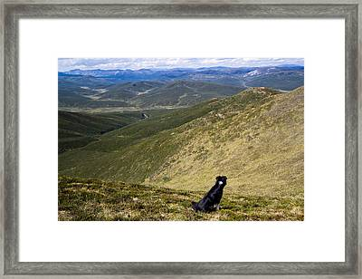 A Border Collie's Playland Framed Print by Kelly Turnage