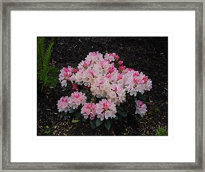 Framed Print featuring the photograph A Bouquet Of Pink And White by Frank Wickham