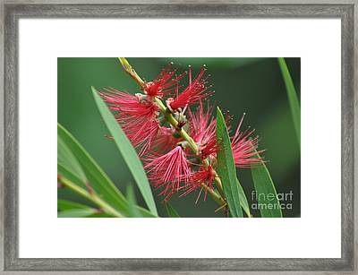 A Brush With Beauty Framed Print
