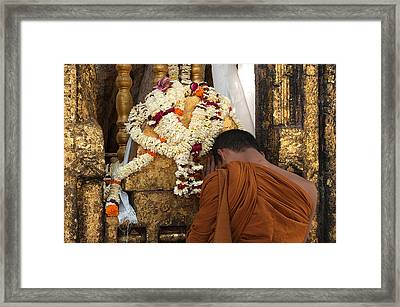 A Budhist Devotee Framed Print by Mukesh Srivastava