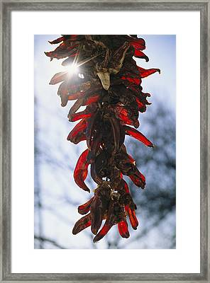 A Bunch Of Red Peppers Hung To Dry Framed Print