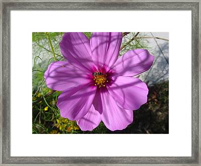Framed Print featuring the photograph A Busy Bee by Frank Wickham