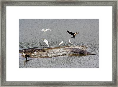 A Busy Day Framed Print by Paulette Thomas