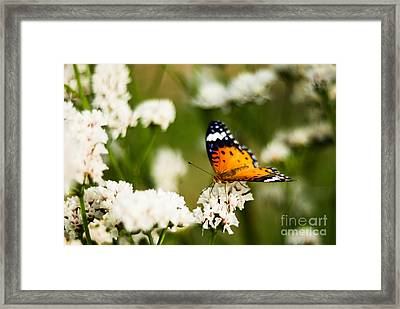 A Butterfly Affair Framed Print by Syed Aqueel