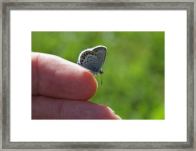 A Butterfly On The Finger Framed Print by Ulrich Kunst And Bettina Scheidulin