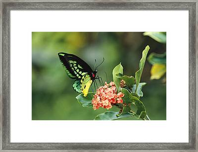 A Butterfly Perched On A Flower Framed Print