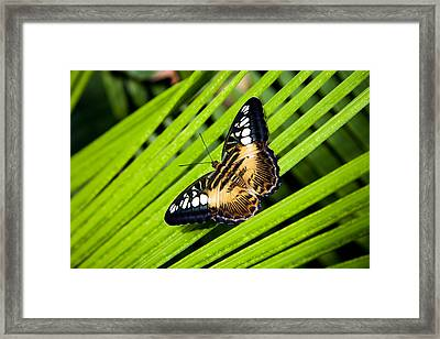A Butterfly Perches On A Palm Frond Framed Print