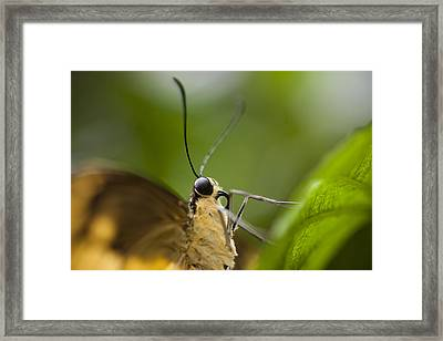 A Butterfly Perches On The Edge Framed Print by Taylor S. Kennedy