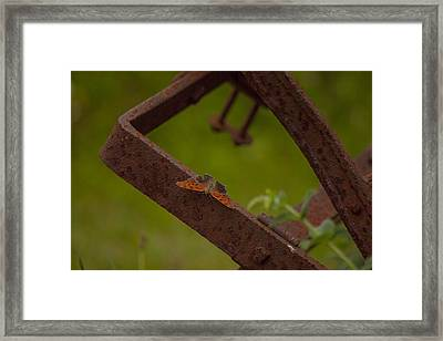 A Butterflys Resting Place Framed Print by Karol Livote