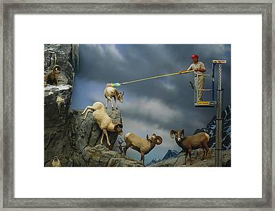 A Cabelas Employee Dusts Off A Display Framed Print