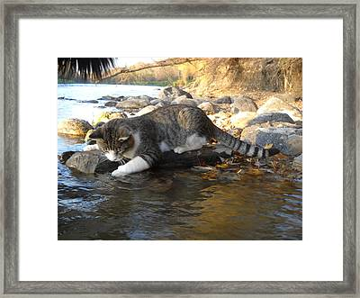 A Cat Goes Fishing Framed Print
