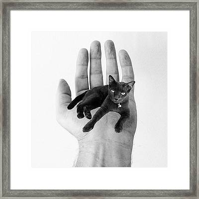 A Cat In The Hand Is Worth Framed Print