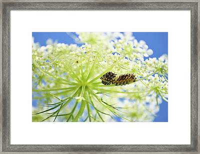 A Caterpillars Palace Framed Print