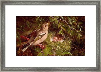 A Chaffinch At Its Nest Framed Print