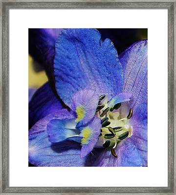 A Close Look Framed Print by Bruce Bley