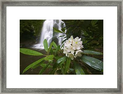 A Close Up Of A Rhododendron Framed Print