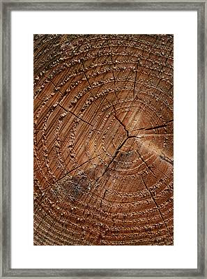 A Close Up Of Tree Rings Framed Print by Sabine Davis