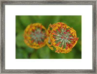 A Close Up View Of Flowering Stalks Framed Print by Darlyne A. Murawski