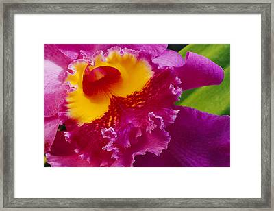 A Close View Of A Bright Pink Cattleya Framed Print