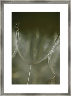 A Close View Of A Dandelion Seed Framed Print