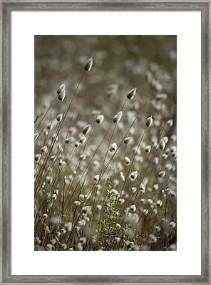 A Close View Of Coastal Grass Seedlings Framed Print