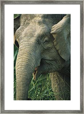 A Close View Of The Face Of One Framed Print