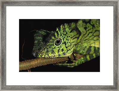 A Close View Of The Head Of A Juvenile Framed Print