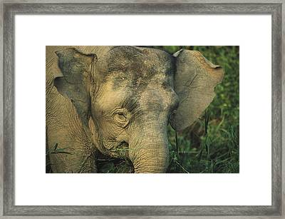 A Close View Of The Head Of An Asian Framed Print