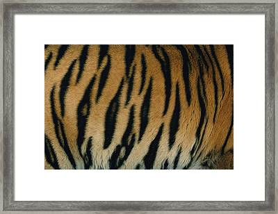 A Close View Of The Patterned Skin Framed Print by Michael Nichols