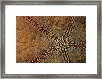 A Close View Of The Skin Of A Cushion Framed Print by Tim Laman