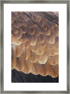 A Close View Of The Wing Feathers Framed Print by Jason Edwards