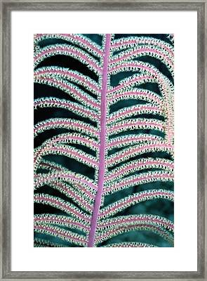A Close-view Photograph Of The Feathery Framed Print by Wolcott Henry