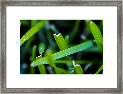A Closer Look Framed Print by Scott McGuire