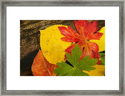 A Closeup Of Autumn Leaves Framed Print