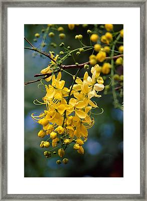 A Cluster Of Flowers Cascades Framed Print by Jason Edwards