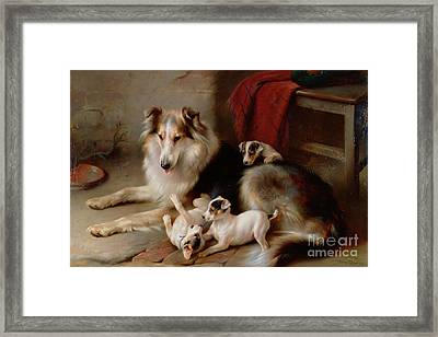 A Collie With Fox Terrier Puppies Framed Print by Walter Hunt