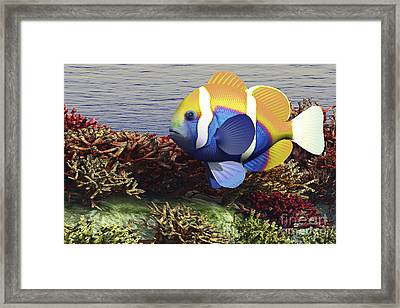 A Colorful Clownfish Swims Among Framed Print