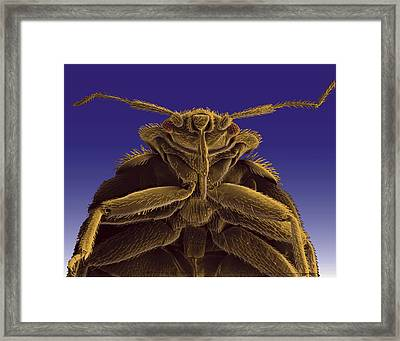 A Colorized Microscopic Image Framed Print by Darlyne A. Murawski
