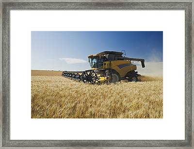 A Combine Harvests Durum Wheat Framed Print by Dave Reede