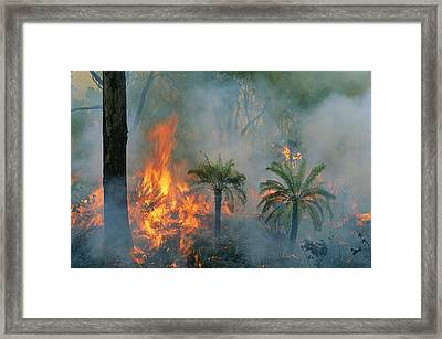 A Controlled Fire Helps Prevent Framed Print by Randy Olson