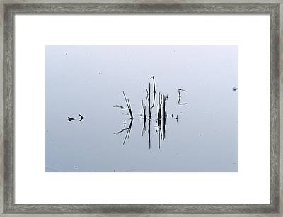 A Damsel Fly Roosting On Reed Stems Framed Print by Jason Edwards
