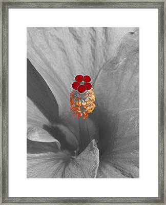 A Dash Of Color Hibiscus Framed Print by James Granberry