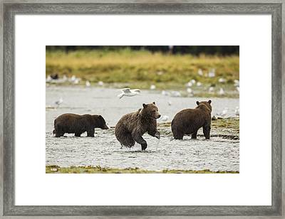 A Day At The Salmon Stream Framed Print by Tim Grams
