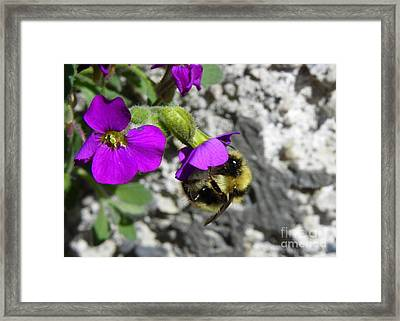 A Day's Work Framed Print