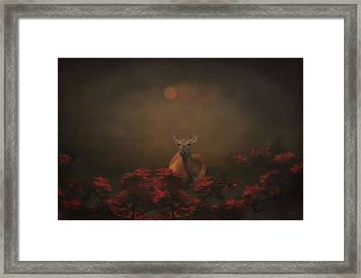A Deer In The Sunset Framed Print by Tom York Images