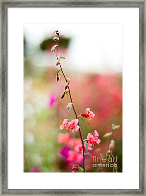 A Delicate Rise Framed Print