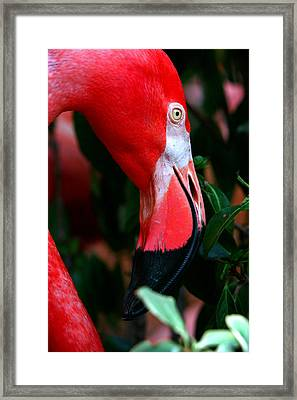 Framed Print featuring the photograph A Delicate Shade Of Power by Lon Casler Bixby